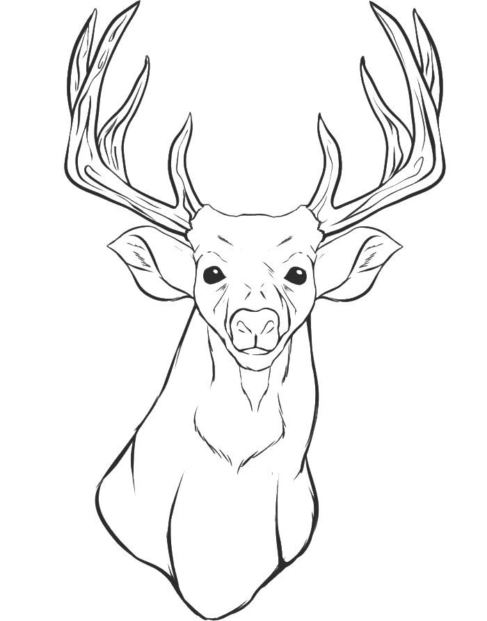 animal head coloring pages a deer head coloring for kids animal coloring pages animal head coloring pages