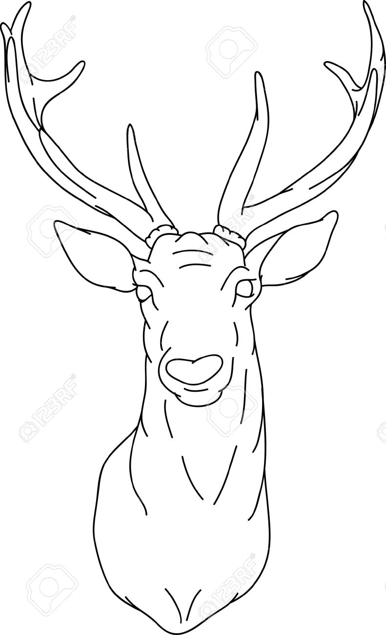 animal head coloring pages free cartoon pictures of deer download free clip art animal coloring head pages