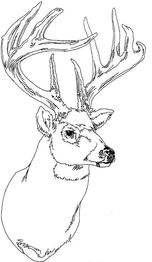animal head coloring pages ruminant mammal deer 20 deer coloring pages free printables pages head animal coloring