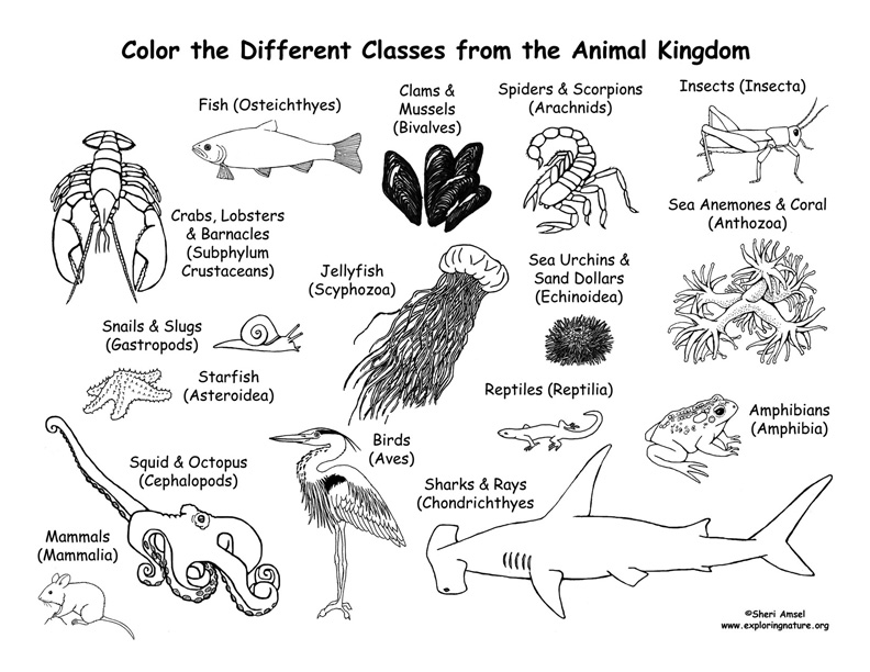 animal kingdom colouring book big an interview with colouring book illustrator millie animal big colouring book kingdom