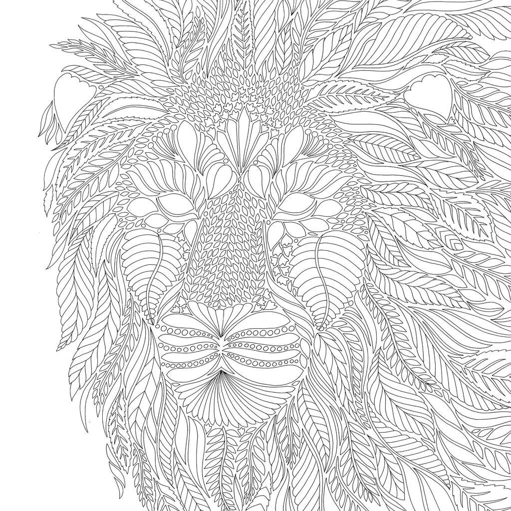 animal kingdom colouring book big millie marotta39s tropical wonderland a colouring book kingdom colouring big animal book