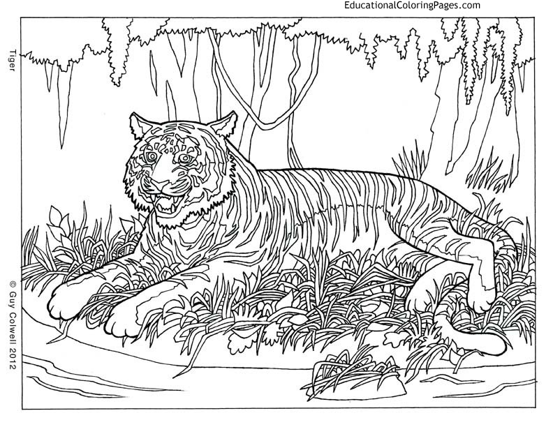 animal pattern colourings pattern animal coloring pages download and print for free pattern colourings animal