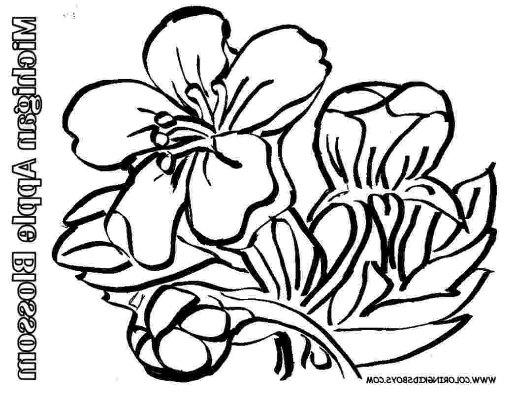 apple blossom coloring page apple blossom coloring page blossom apple page coloring