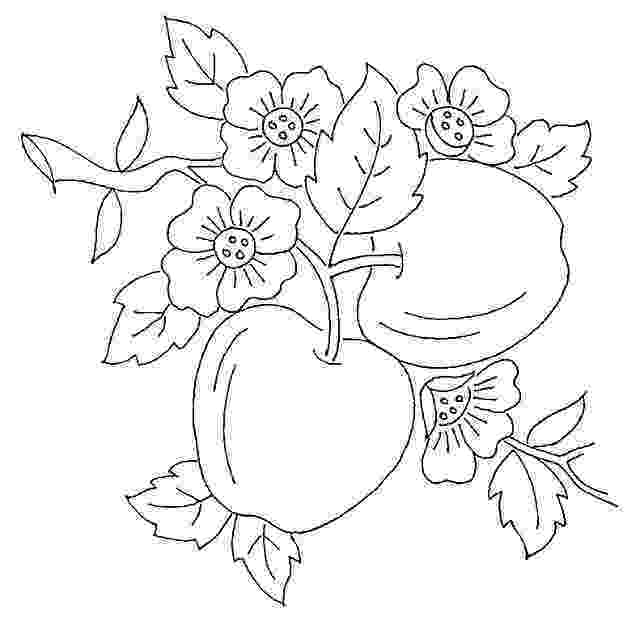 apple blossom coloring page apple blossom line drawing at getdrawingscom free for apple coloring page blossom