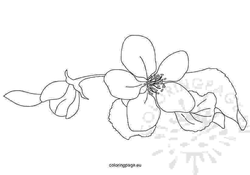 apple blossom coloring page inkspired musings apple blossom promises coloring apple page blossom