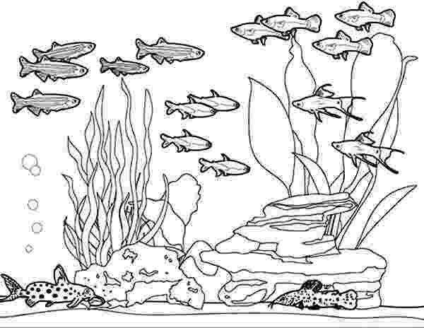 aquarium coloring pages aquarium fish drawing at paintingvalleycom explore coloring aquarium pages