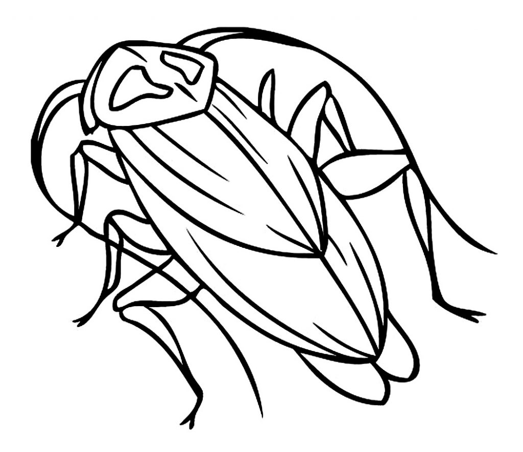 art pictures to color free printable cockroach coloring pages for kids art pictures color to