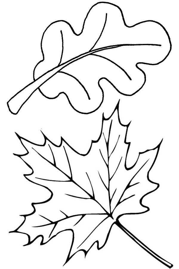autumn leaves pictures to colour 8 leaves coloring pages printable leaves to color colour autumn pictures leaves to
