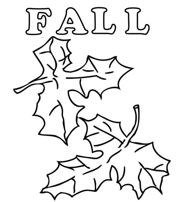 autumn leaves pictures to colour autumn leaves coloring page free printable coloring pages colour to autumn pictures leaves