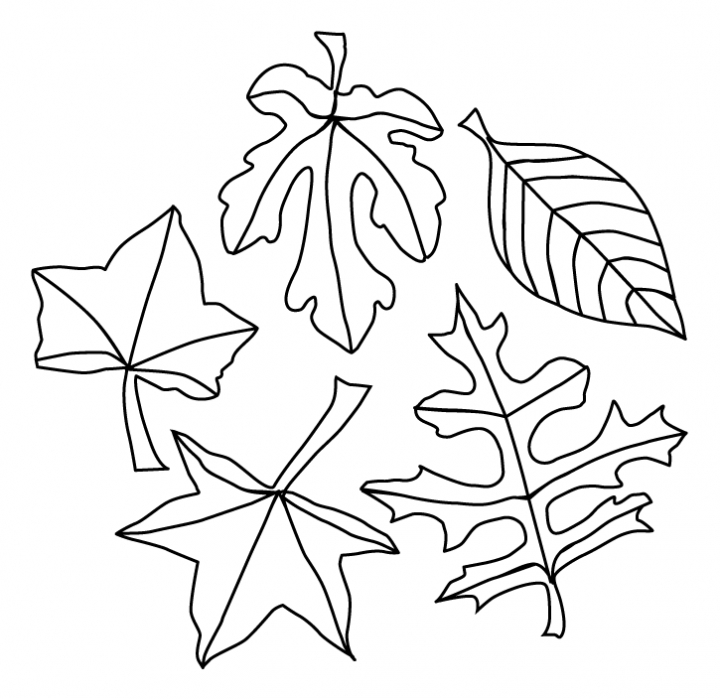 autumn leaves pictures to colour fall leaves coloring pages best coloring pages for kids pictures colour to leaves autumn