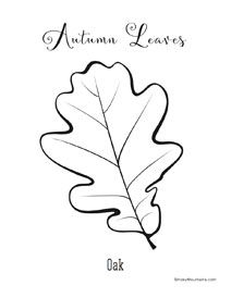 autumn leaves pictures to colour leaf fall leaves beautiful autumn coloring page colour leaves to pictures autumn