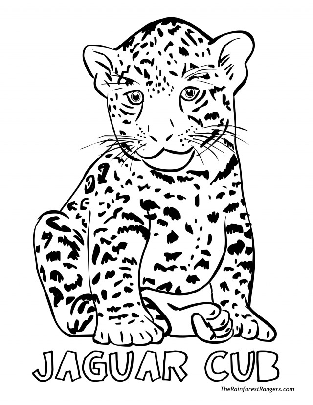 baby jaguar coloring pages jaguar coloring pages to download and print for free baby pages coloring jaguar