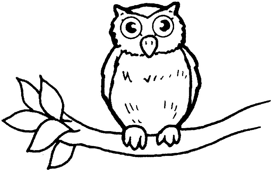baby owl coloring pages baby owl on branch coloring page h m coloring pages baby coloring pages owl