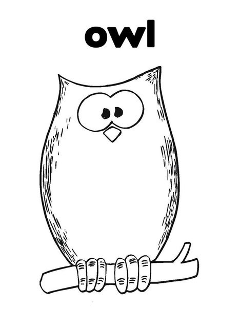 baby owl coloring pages how to draw a cute snowy owl for kids google search baby owl pages coloring