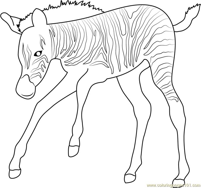 baby zebra coloring pages baby zebra coloring pages getcoloringpagescom zebra coloring baby pages