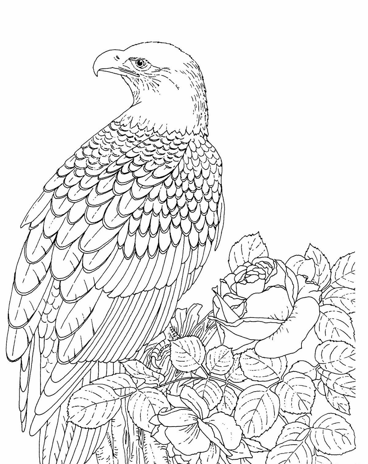 bald eagle coloring page free printable bald eagle coloring pages for kids coloring bald eagle page
