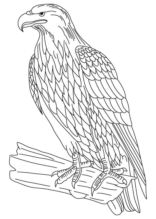bald eagle coloring page free printable bald eagle coloring pages for kids eagle coloring page bald