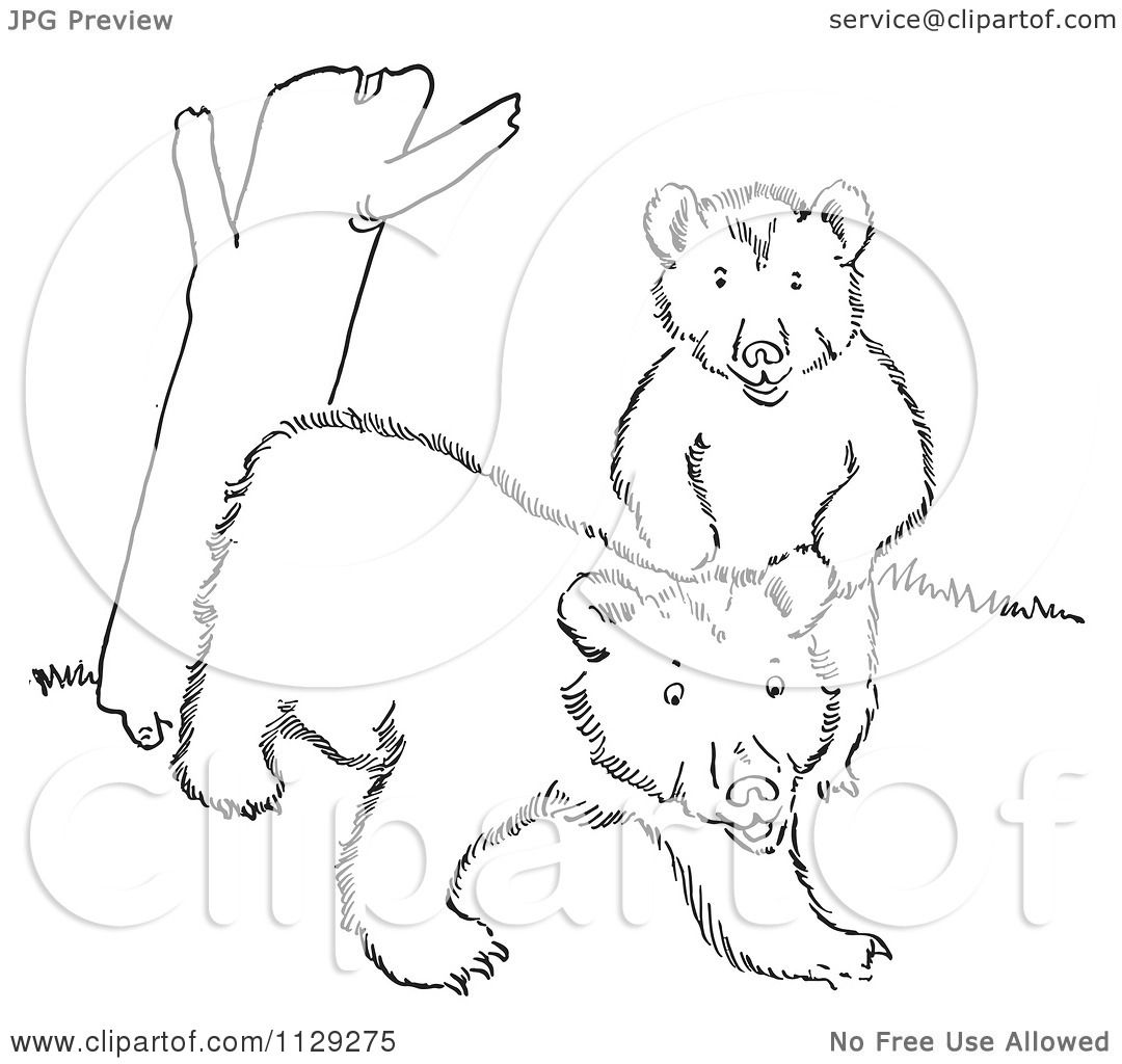 bear cub coloring pages asia black bear cub coloring page free printable cub pages coloring bear