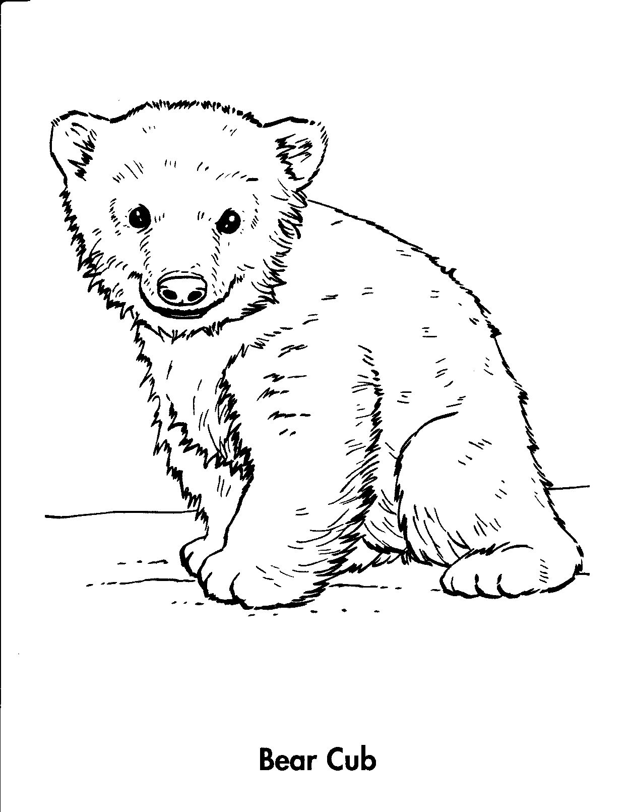 bear cub coloring pages grizzly bear cubs playing coloring page netart coloring cub pages bear