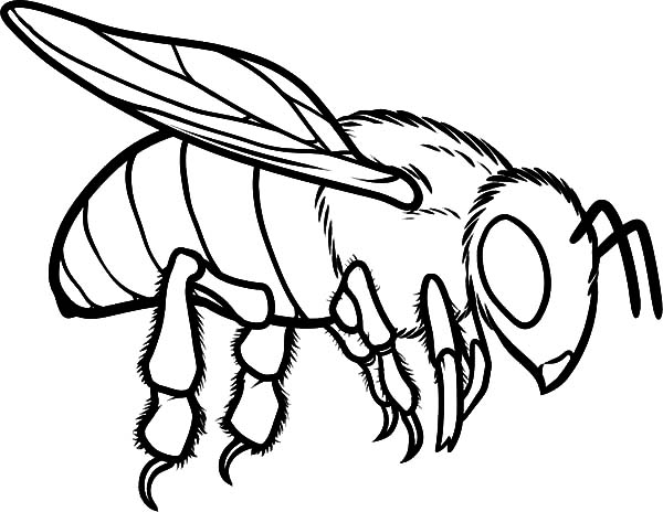 beehive coloring page free printable bumble bee coloring pages for kids beehive coloring page