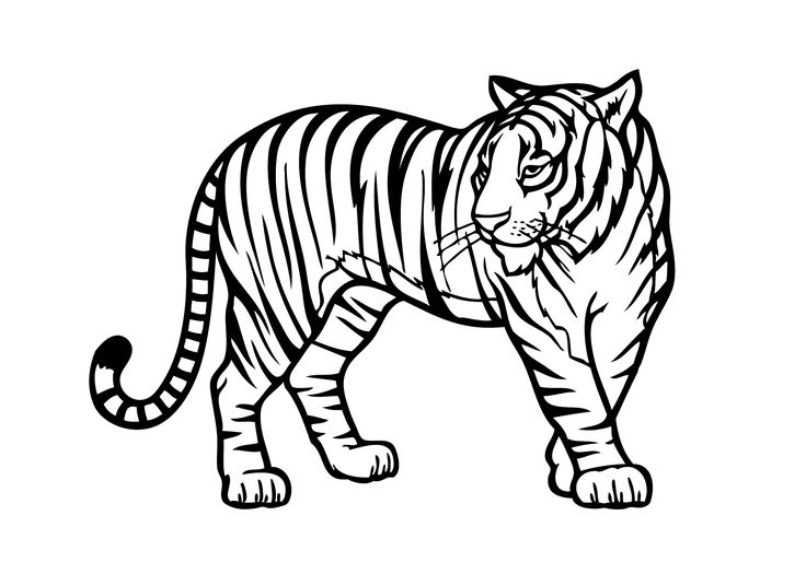 best animal colouring books 137 best animal coloring book images on pinterest animal best colouring books