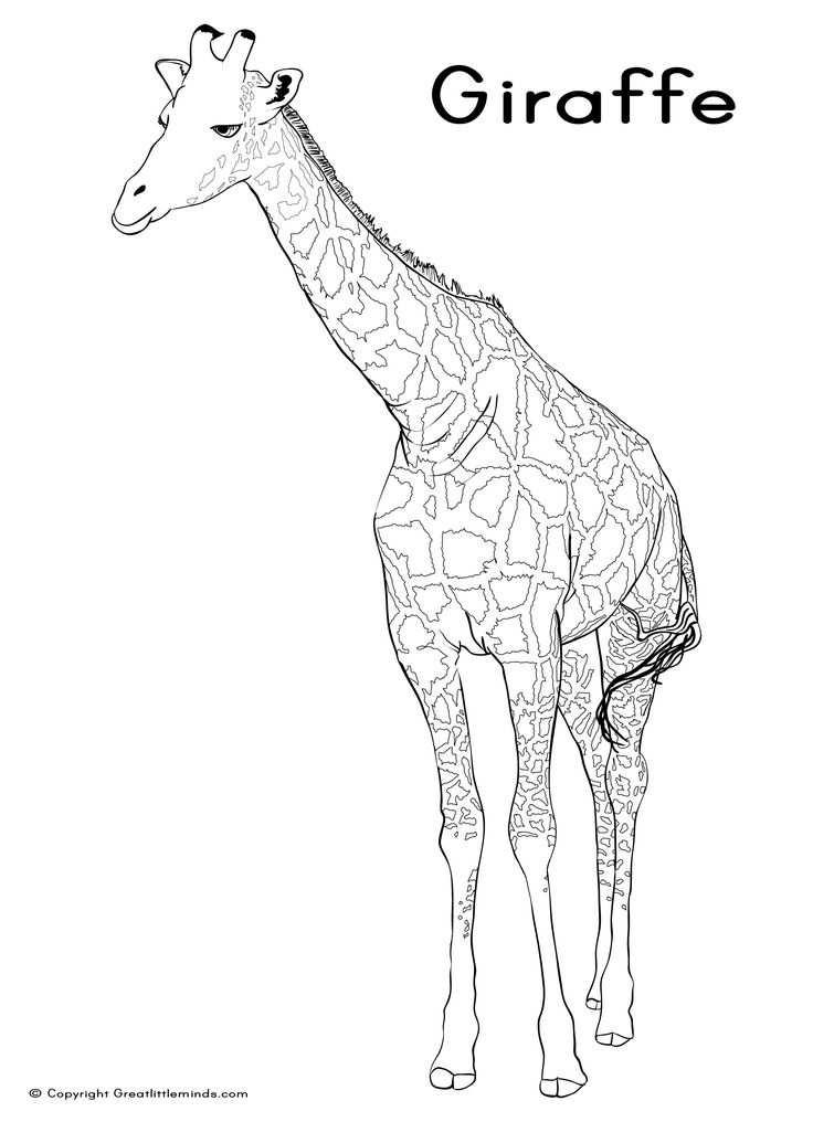 best animal colouring books 137 best images about animal coloring book on pinterest animal books colouring best