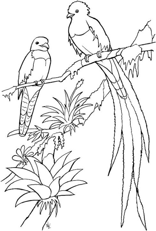 bird coloring pages baby bird coloring pages getcoloringpagescom pages bird coloring
