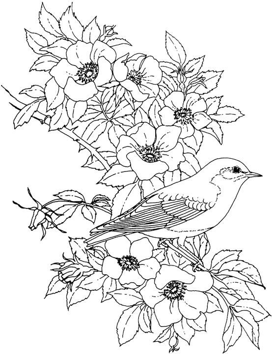 birdsandblooms coloring book baltimore oriole and black eyed susan maryland bird and book coloring birdsandblooms