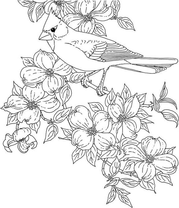 birdsandblooms coloring book free printable coloring page texas state bird northern birdsandblooms coloring book