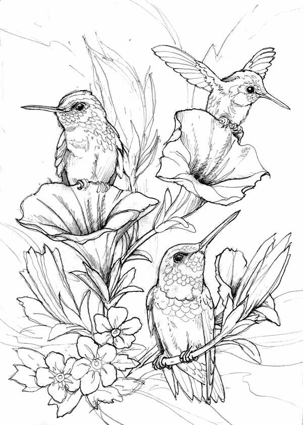 birdsandblooms coloring book his heart of compassion little winter birds coloring birdsandblooms book
