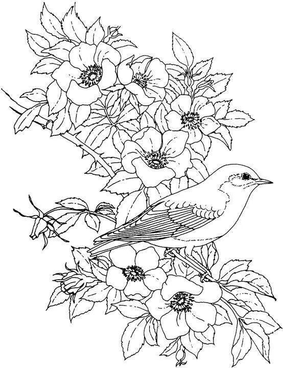 birdsandblooms coloring book hummingbird in flowers coloring page free printable coloring birdsandblooms book