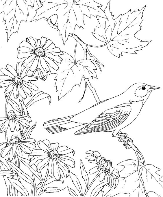birdsandblooms coloring book outline drawing of birds at getdrawingscom free for coloring birdsandblooms book