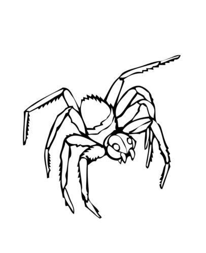 black widow spider coloring page black widow spider drawing at getdrawingscom free for coloring widow black page spider