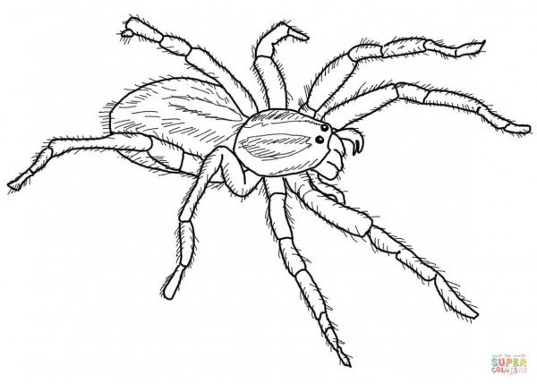 black widow spider coloring pages clip art spiders black widow coloring page i abcteach widow spider black pages coloring