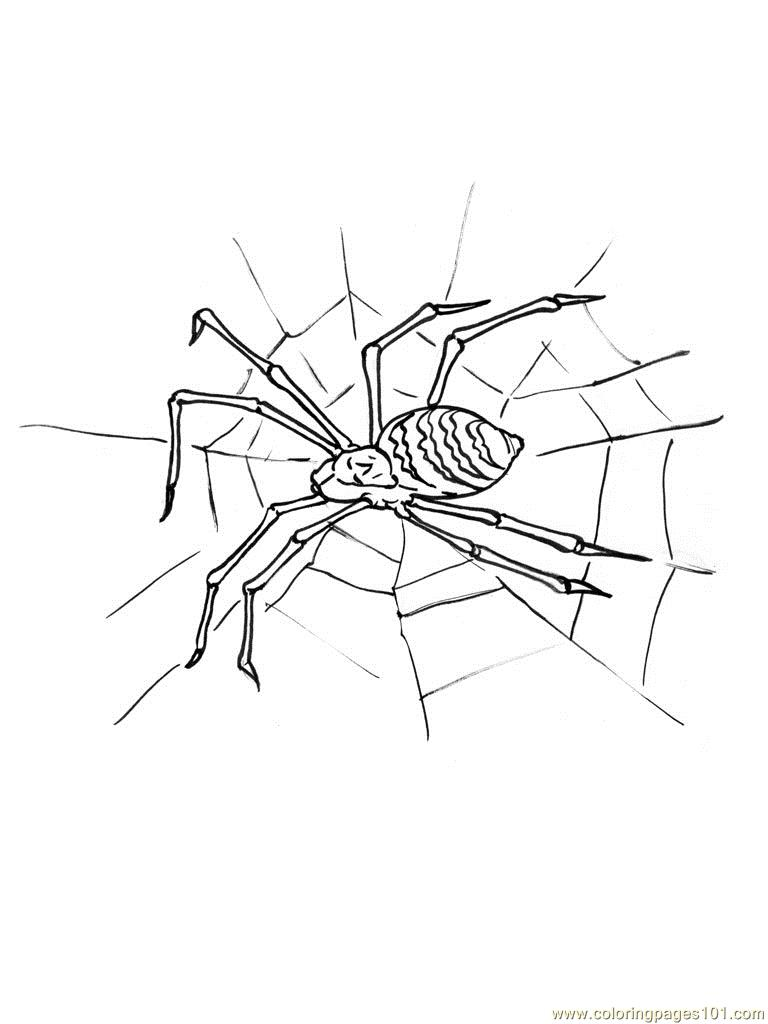 black widow spider coloring pages spider coloring pages getcoloringpagescom widow black spider coloring pages
