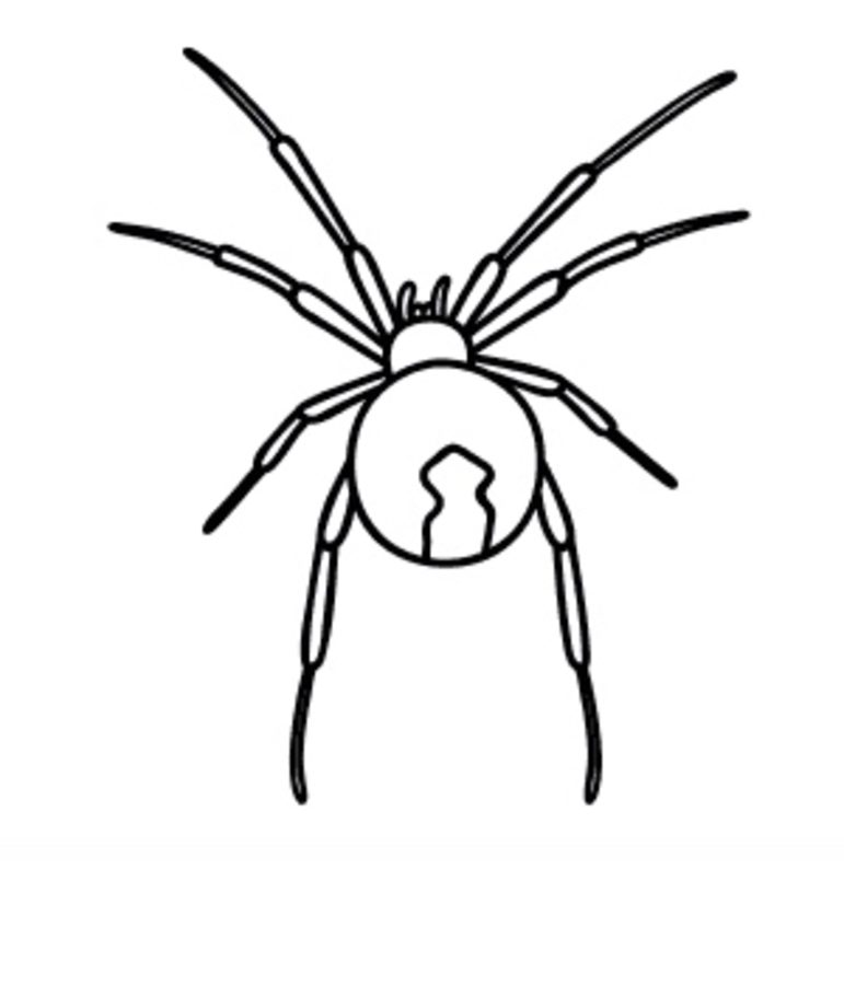 black widow spider coloring pages spiderman spin kleurplaat coloriage araigne imprimer pages spider coloring black widow