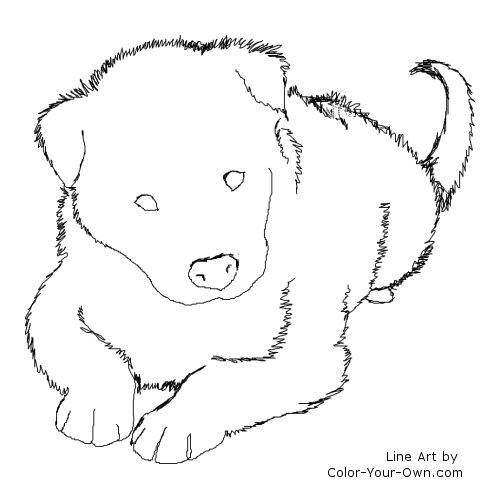 border collie pictures to color border collie coloring page dog art pinterest collie border color to collie pictures