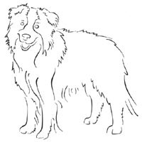 border collie pictures to color border collie coloring page free printable coloring pages to color border pictures collie