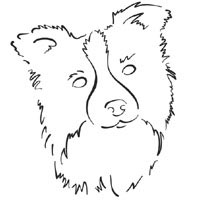 border collie pictures to color border collie coloring pages coloring pages collie border pictures to color