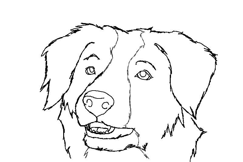 border collie pictures to color border collie coloring pages coloring pages to pictures collie border color