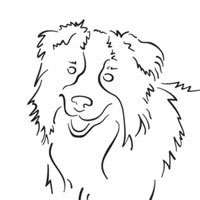 border collie pictures to color border collie coloring pages surfnetkids collie border to color pictures