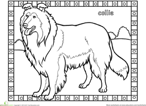 border collie pictures to color border collie dog puppy coloring page border to pictures color collie