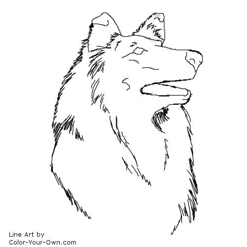 border collie pictures to color border collie dog standingcoloring page border pictures collie color to