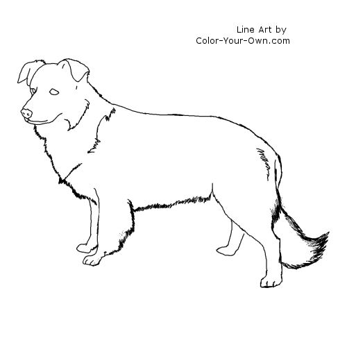 border collie pictures to color border collies dogs to coloring pages to color collie border pictures