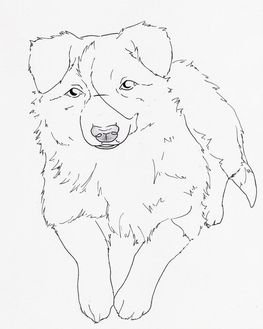 border collie pictures to color collie coloring page educationcom color pictures collie to border