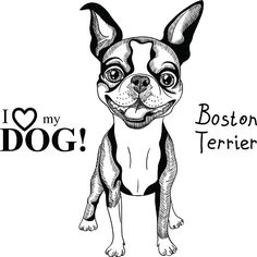 boston terrier coloring page boston terrier coloring page coloring pages dog boston page terrier coloring