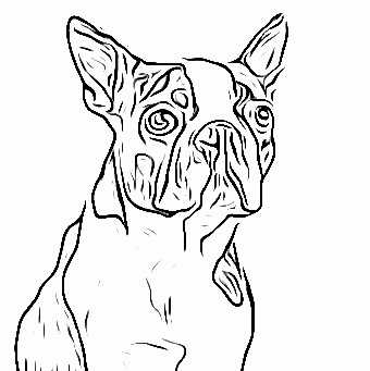 boston terrier coloring page boston terrier coloring page petsidi coloring terrier boston page