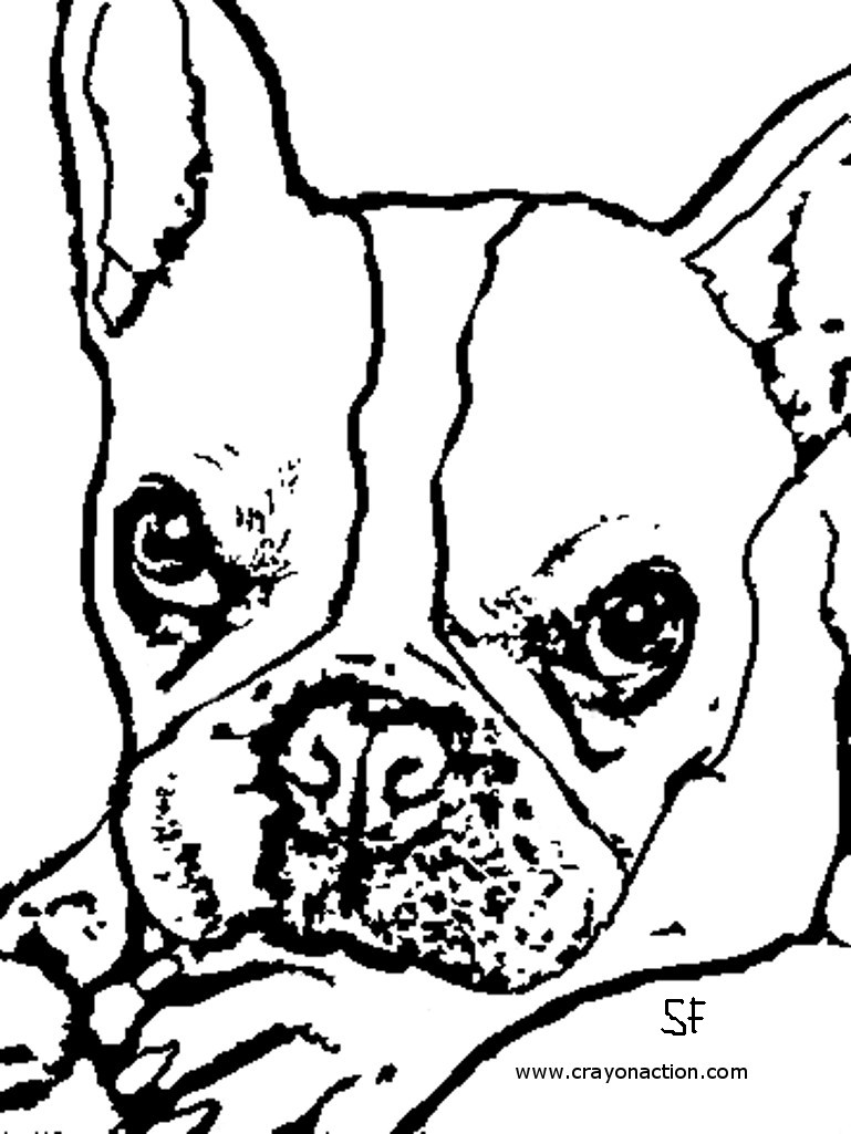 boston terrier coloring page boston terrier coloring pages coloring home page coloring boston terrier
