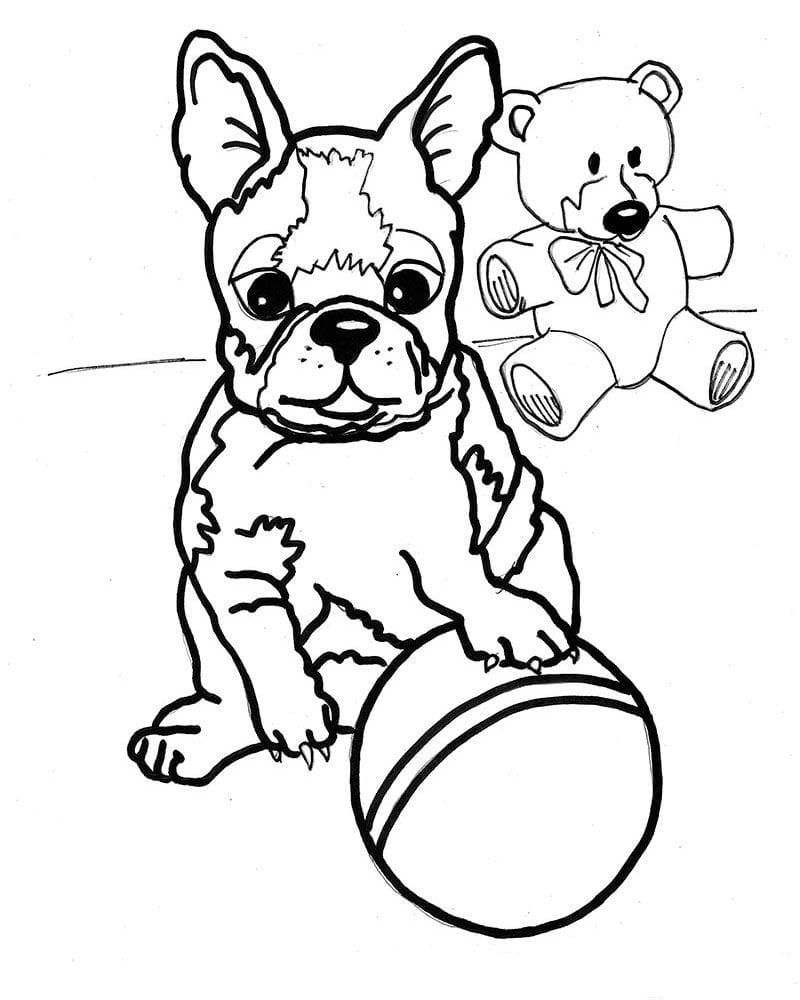 boston terrier coloring page boston terrier coloring pages coloring home terrier page coloring boston