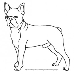 boston terrier coloring page boston terrier coloring pages search yahoo image search page terrier boston coloring